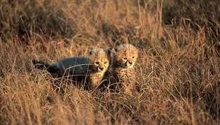 Kenya and Zanzibar: Classic Safari and Beach Adventure