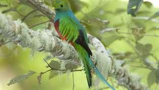 Wildlife Adventure to Costa Rica