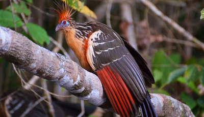 birdlife_400_230