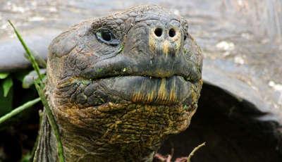 tortoise_400_230