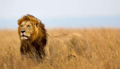 Masai Mara