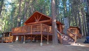 Redwoods in Yosemite