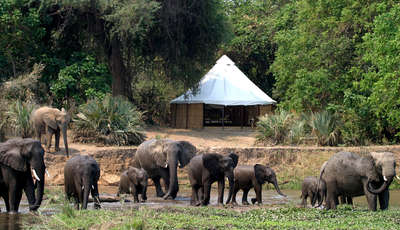 elephants-in-front-of-sausage-tree_400_230