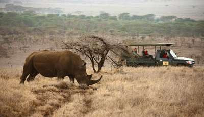 game drive_400_230