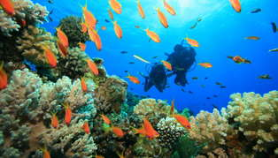 Honeymoon to New South Wales & Fiji