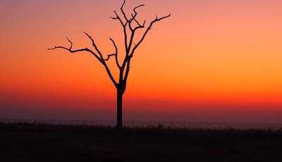 tree_400_230
