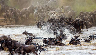 Migration, Kenya