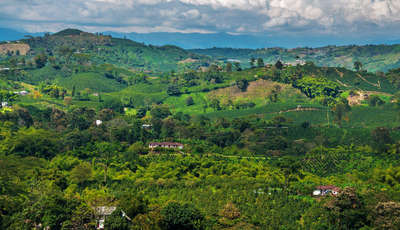view of coffee region_400_230