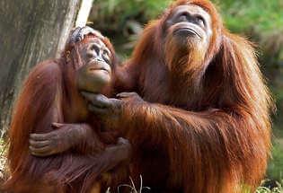 Wildlife Adventure to Indonesia