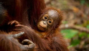 Wildlife Vacation in Malaysia and Borneo