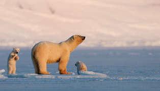 Svalbard, arctic Norway