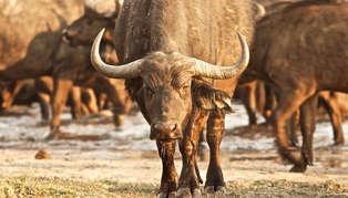 safari Hwange National Park