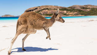 Ultimate Australia Wildlife Adventure