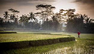 Bali in Serene Style
