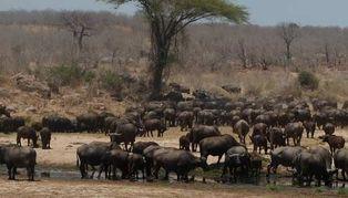 Mwagusi Safari Camp, Tanzania, Africa
