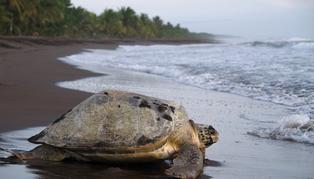 Caribbean & Lowlands, Costa Rica