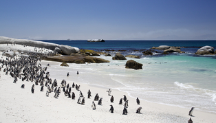 South Africa, beach