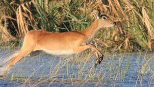 Okavango Delta & Moremi