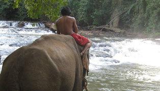 Cambodia, jungle