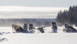 Sweden, Lapland
