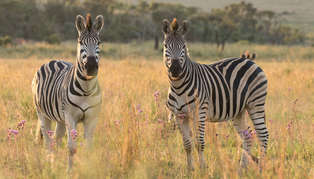 Welgevonden Game Reserve, South Africa