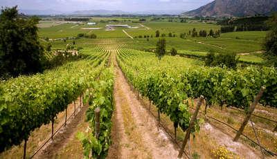 vineyardsproducingchileanwinenearsantacruzinthecolchaguavalleyshutterstock776892544_400_230