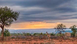 Desert & Dunes Safari