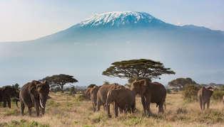 Amboseli & Southeast Kenya