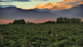 Cordoba, Mendoza & Winelands