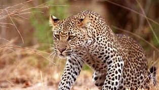 Selous & Southern Tanzania